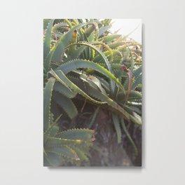 Succulent Smitten 2 Metal Print