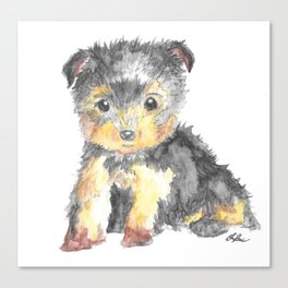 Yorkie Pup Canvas Print