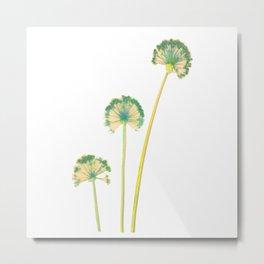 three flowers 4 Metal Print