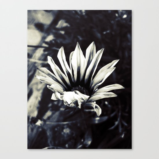 dead beatiful flower 3 Canvas Print
