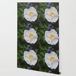 White Dog Rose and Lavender Wallpaper