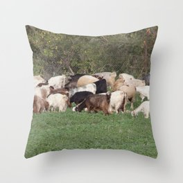 Sheep Grazing in Israel  Throw Pillow