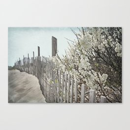 Vintage Inspired Sand Fence and White Flowers at the Beach with Blue Sky Canvas Print