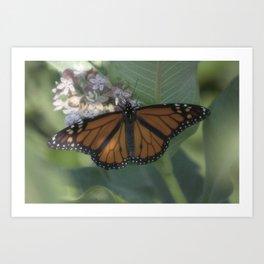Monarch Butterfly XII Art Print