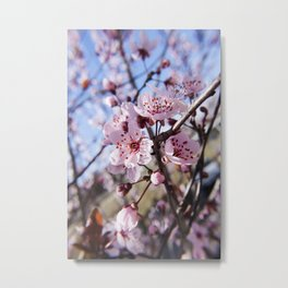 Cherry Blossom Photography Print Metal Print