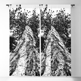 Squirrel View // Climbing Tall Tree Trunks // Winter Landscape Snowy Decor Photography Blackout Curtain