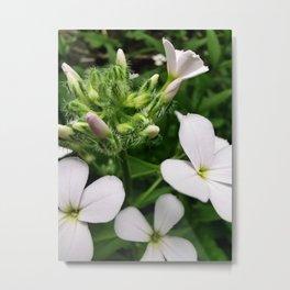 Milkmaid's Flowers and Buds Metal Print