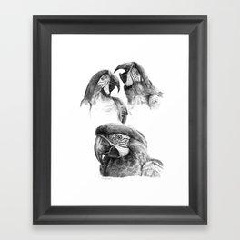 Macaw study SK0114 Framed Art Print