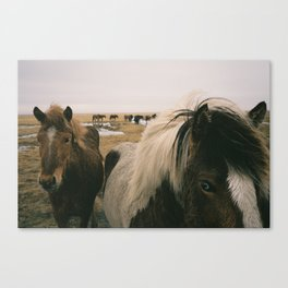 Iceland Pony Canvas Print