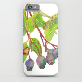 Gum tree branch with gumnuts - Watercolour iPhone Case