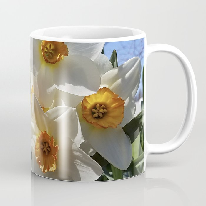 Sunny Faces of Spring - Gold and White Narcissus Flowers Coffee Mug