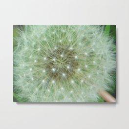 White Dandelion Fuzz Metal Print