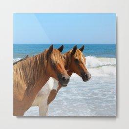 Watercolor Horse 55, Assateague Pony, Assateague, Maryland, Carrots? Metal Print