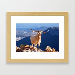 White Longhorn goat 7754 Framed Art Print