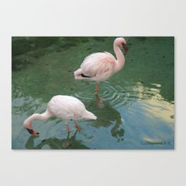 Flamingo Love Canvas Print