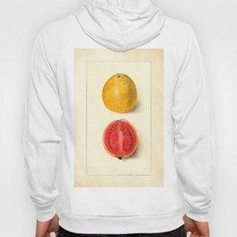 Vintage Botanical Guava Hoody