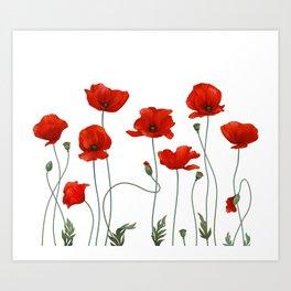 Poppy Stems Art Print