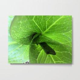 Spring Green - Skunk Cabbage Metal Print