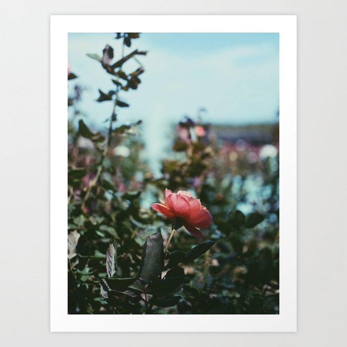 Rose Gardens Art Print