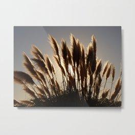 Californian Feathers Metal Print