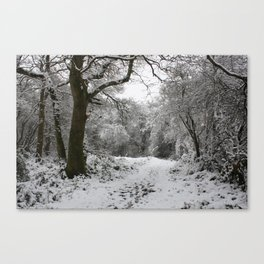 Landpark Wood Canvas Print