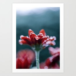 Red Flower and Rain Drops Art Print