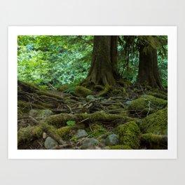 Mossy Woodland Scene Art Print