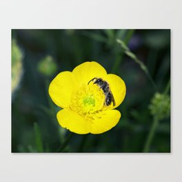 Sleepytime Bee Canvas Print