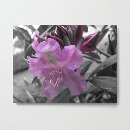 Lavender Rhododendron Metal Print