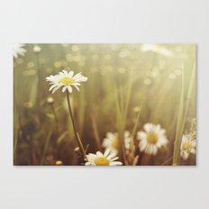 A Daisy Day Canvas Print