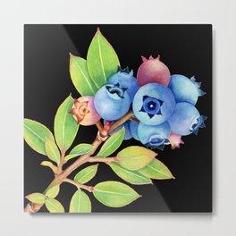 Wild Maine Blueberries Metal Print