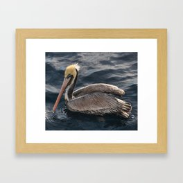 Brown Pelican Hanging out Framed Art Print