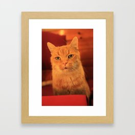 Cat in Red with milk mustache Framed Art Print
