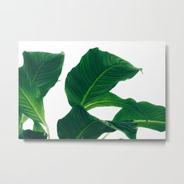 Green Leafs (Color) Metal Print