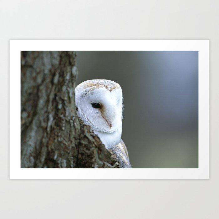 BARN OWL APPEARANCE Art Print