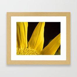 Yellow Disk Sunflower Macro 3 Framed Art Print