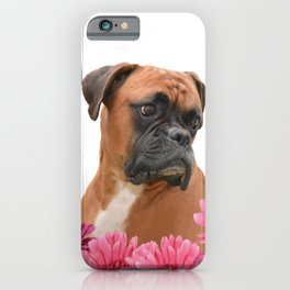 Boxer with pink Gerbera Flowers iPhone Case