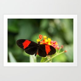 Beautiful buterfly, insect on green nature floral background, photographed at Schmetterlinghaus, But Art Print