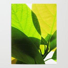 Avocado Leaves Poster