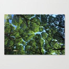 Crack willow Canvas Print