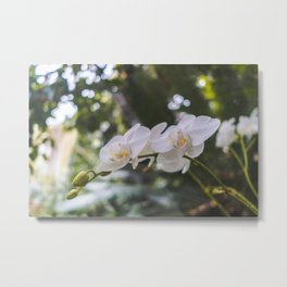 Flower, Royal Botanic Garden Edinburgh Metal Print