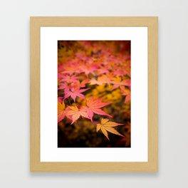 Japanese Elm Leaves Framed Art Print