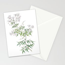 Jasmine Flower Illustration Stationery Cards
