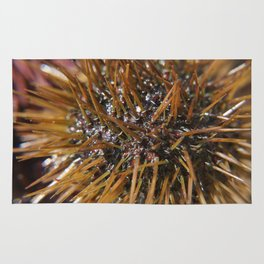 Sea urchin gold Rug