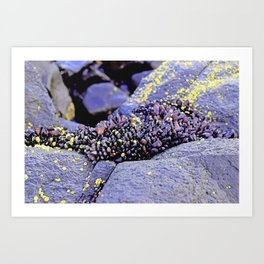 Nature's Secrets Art Print