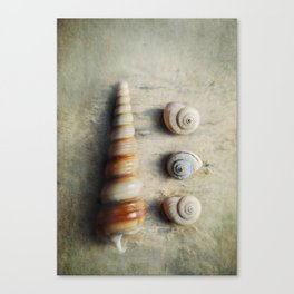 Shells on Beach wood. Canvas Print