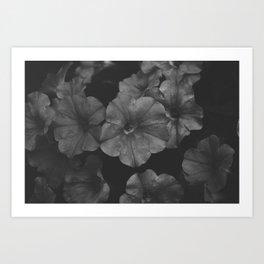 Boston Flower Art Print
