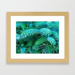 Fantastic Blue Spruce Framed Art Print