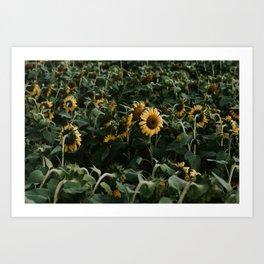 Sunflowers // Art Print