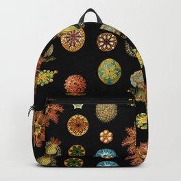 Ernst Haeckel - Scientific Illustration - Ascidiae Backpack